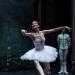 05_01_2019_Balletto di S. Pietroburgo_La Bella Addormentata_Gigi_Fratus (28 di 29)