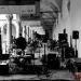 JAZZMI_2020_ARIANNA_MASINI_CITY_FLOWERS_1_0609_Erminio_Garotta
