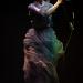 aurora_auditorium_Roma_stefano_ciccarelli (3)