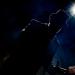 25.12.2019_The-Spleen-Orchestra_Live-Club-Trezzo-dAdda_Gigi-Fratus_FG-Music-Photo