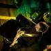 24_07_The-Owling-Orchestra_Pintupi_Gigi-Fratus_FG-Music-Photo-12